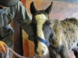 slap asbos on the horse dumpers: government acts on scandal of cruel owners who abandon animals on open land